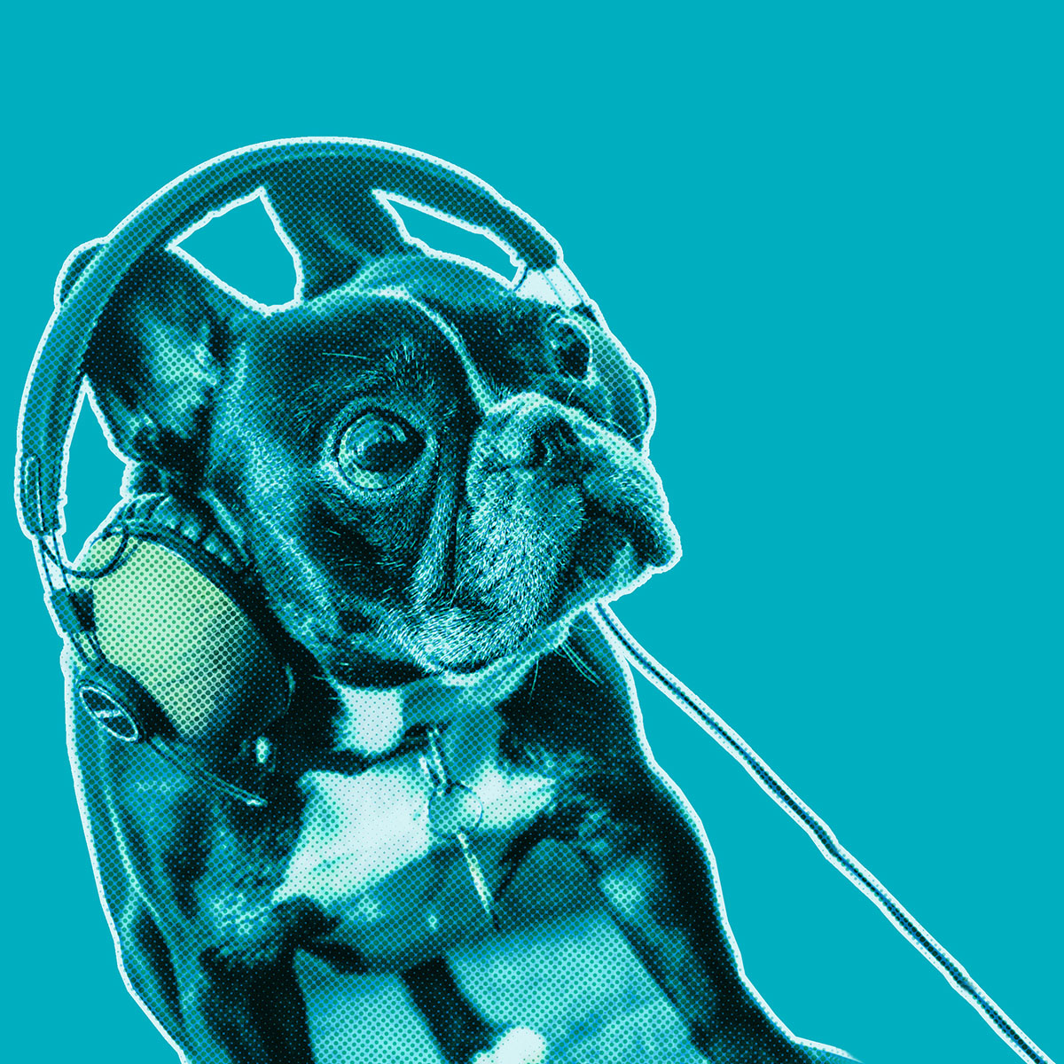 Turquoise-filtered picture of a French Bulldog wearing headphones